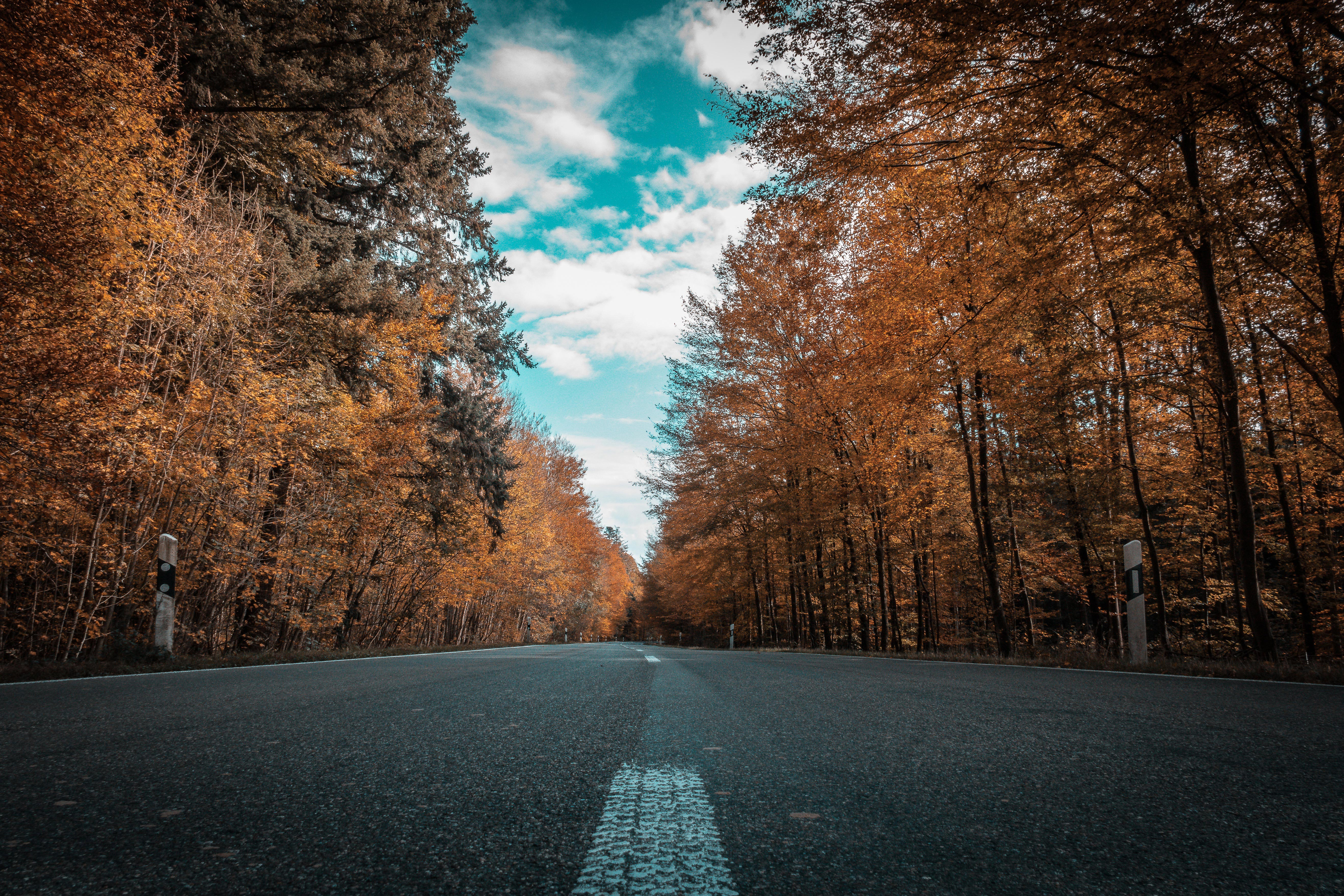 Alone Road Forest Autumn Golden Trees Ultra 4k Hd Nature
