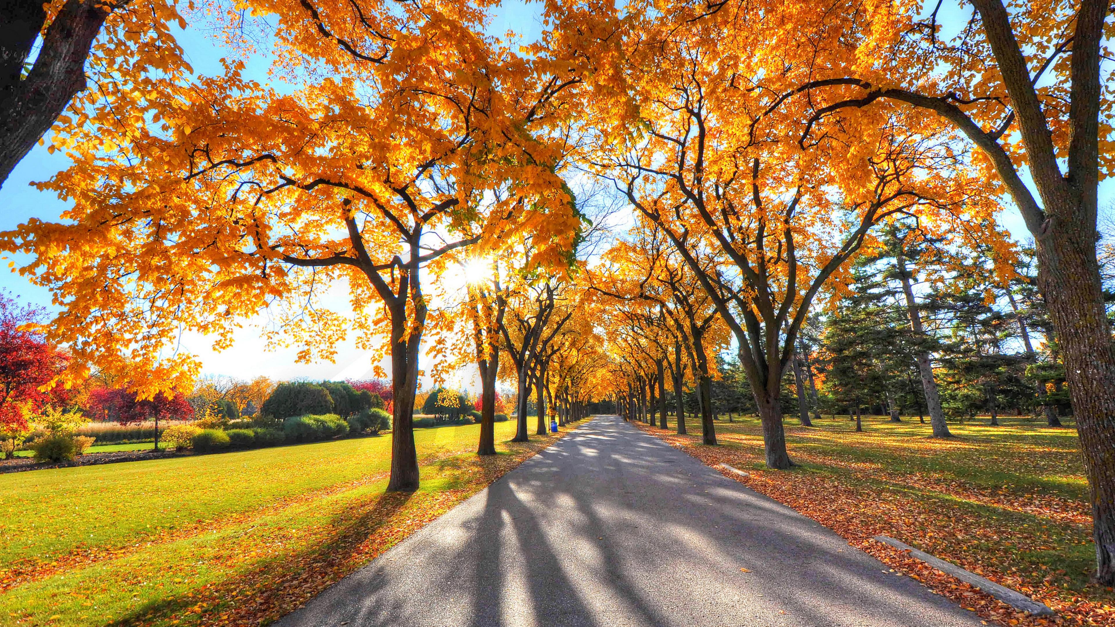 1280x720 autumn alley park 720p hd 4k wallpapers images