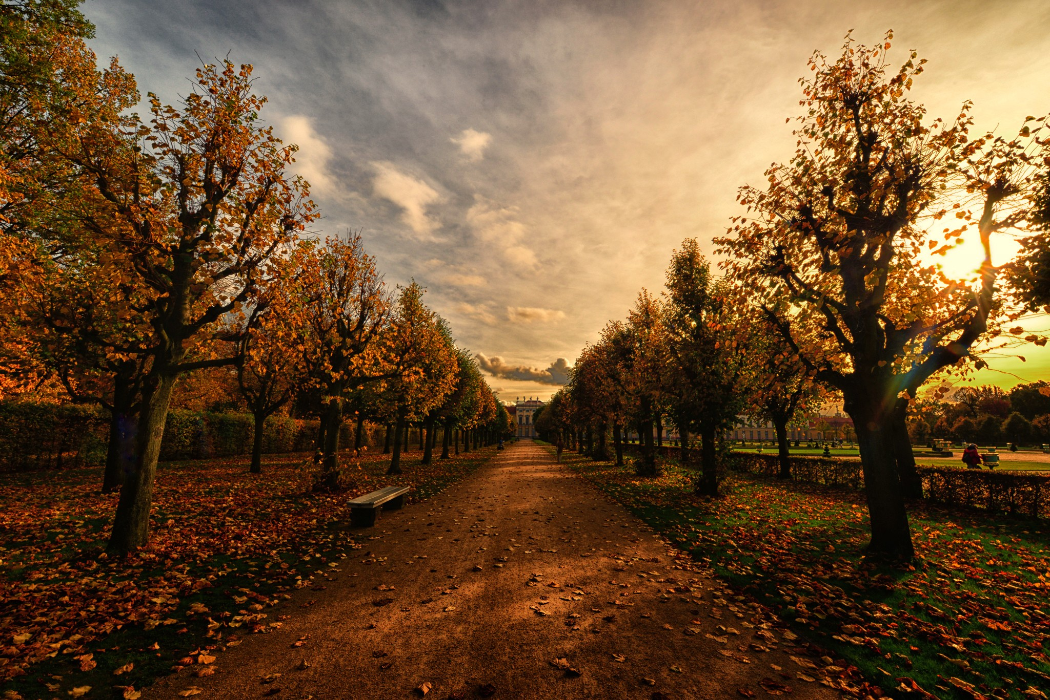 Autumn Trees Path
