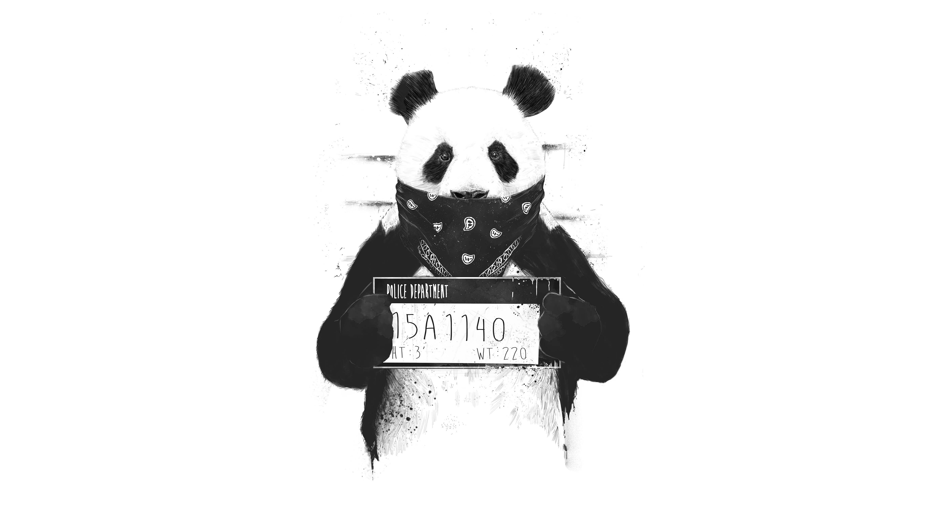 Bad Panda Hd Artist 4k Wallpapers Images Backgrounds