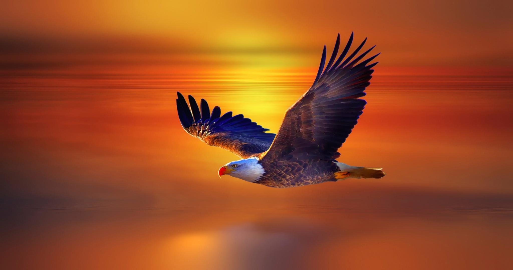 2048x1152 Bald Eagle 2048x1152 Resolution Hd 4k Wallpapers