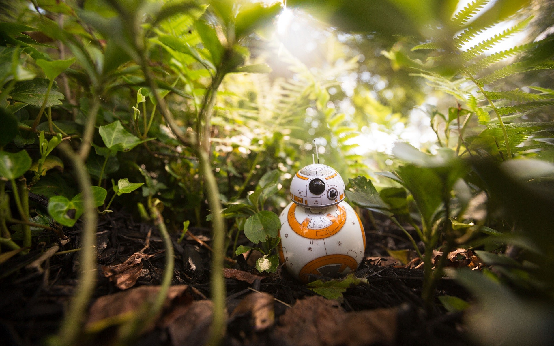 bb8 wallpaper hd - photo #31