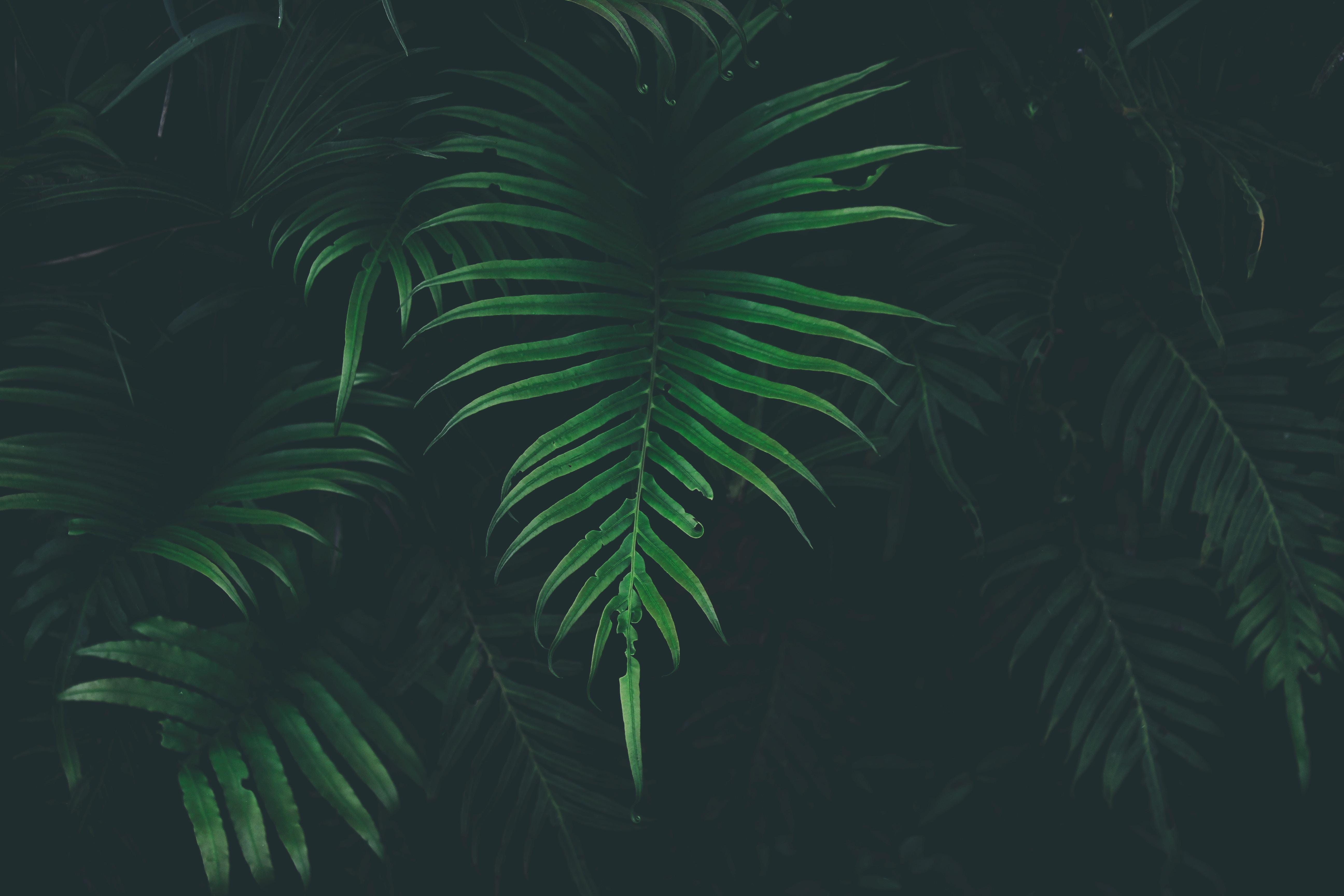 Big Leaves Cool Temperature 5k, HD Nature, 4k Wallpapers