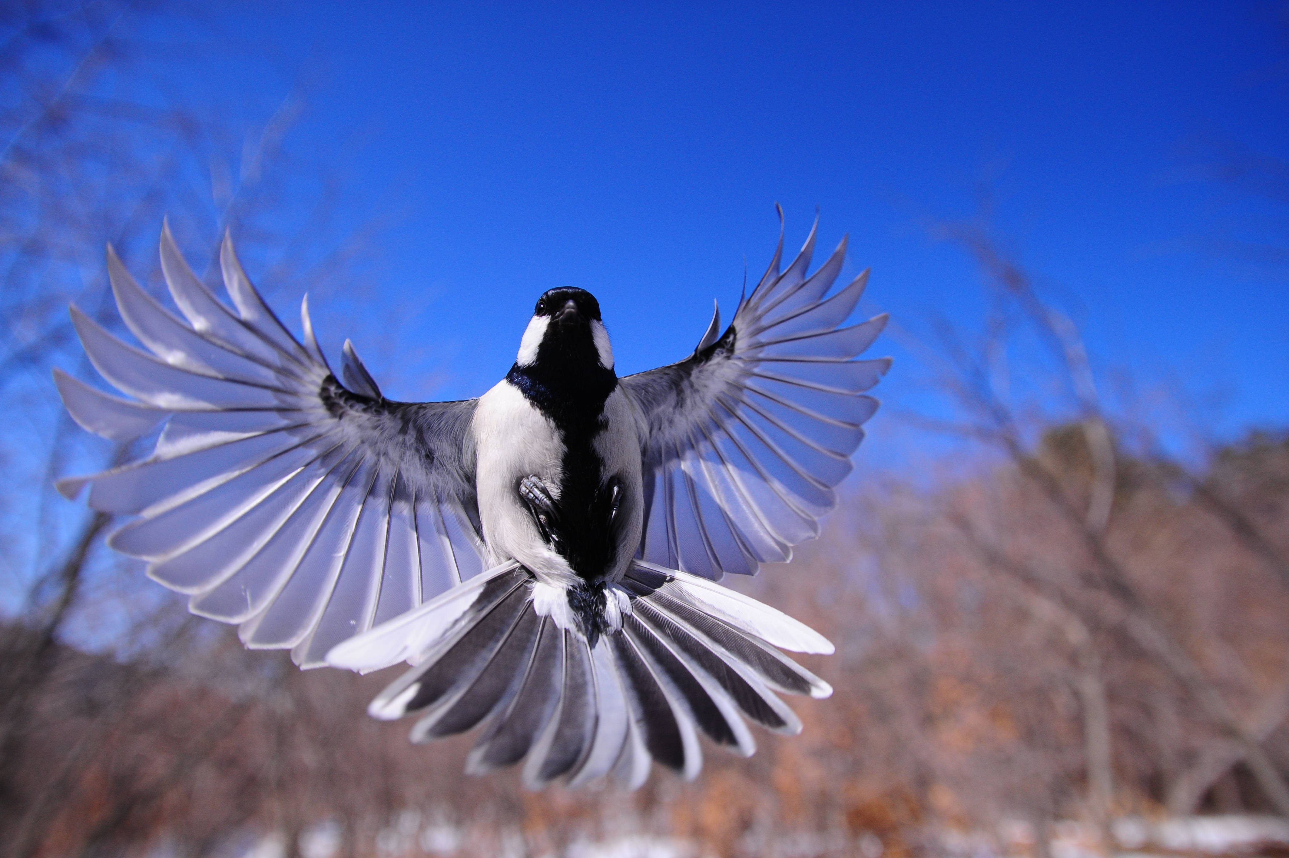 Bird Flapping Wings, HD Birds, 4k Wallpapers, Images ...