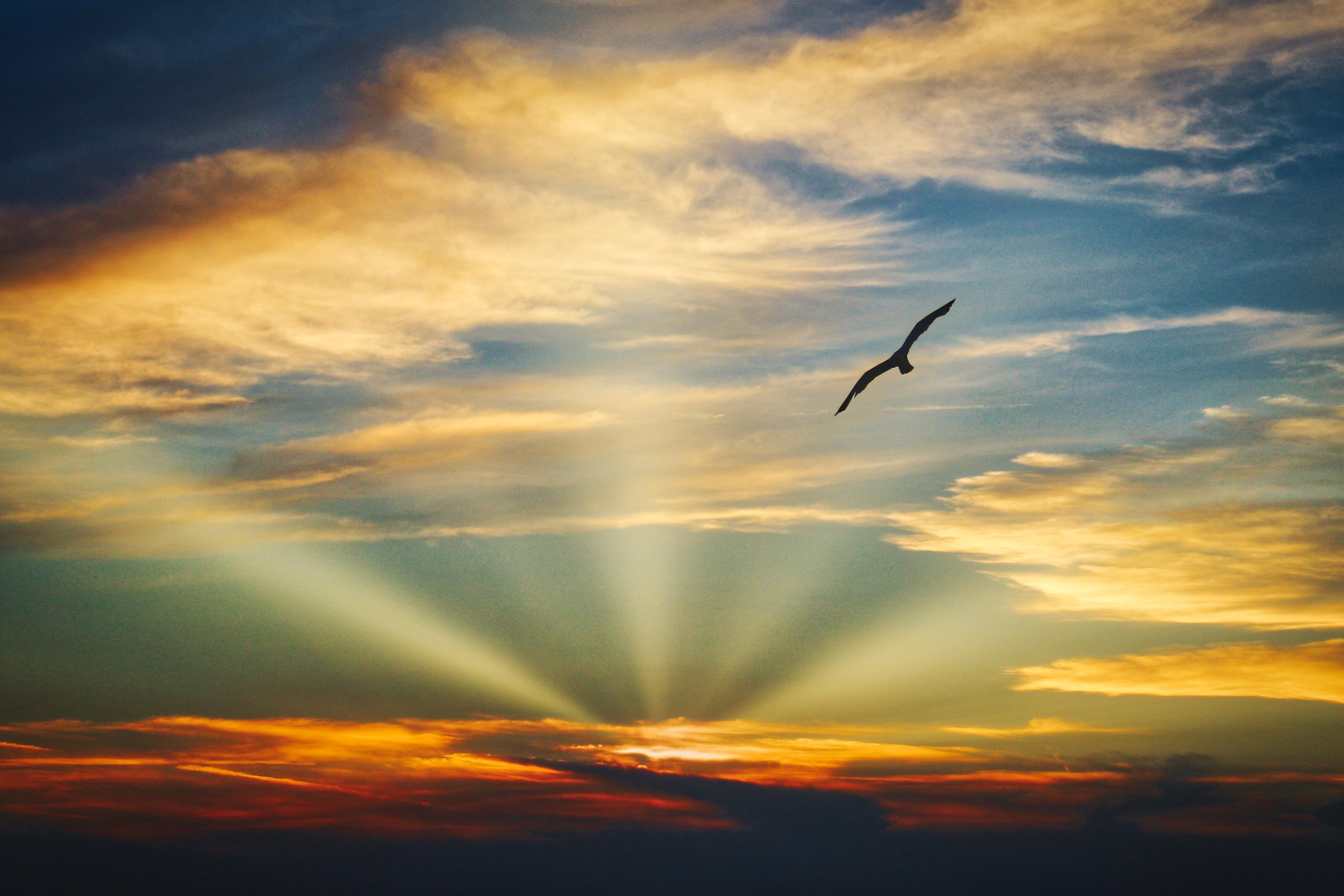 Wallpapers Hd Flying Birds Apple Animals Blue Sky Desktop: Bird Flying Sunset Evening View Clouds Beautiful Sky 5k