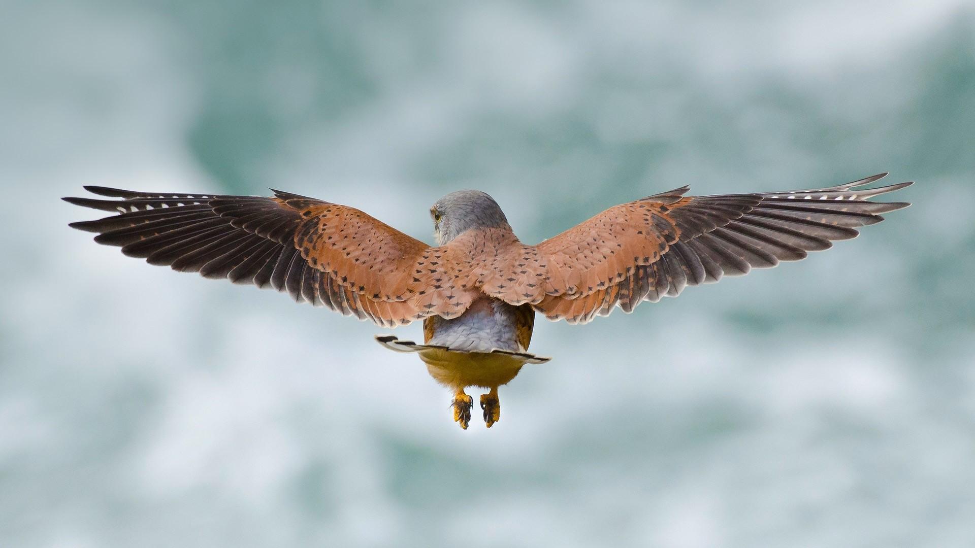 Birds Wings, HD Birds, 4k Wallpapers, Images, Backgrounds ...