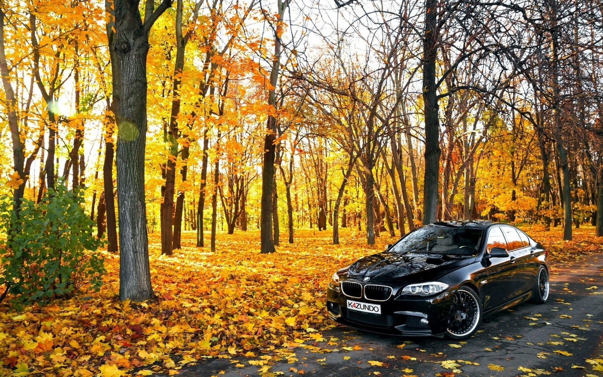 Black BMW In Forest, HD Cars, 4k Wallpapers, Images ...