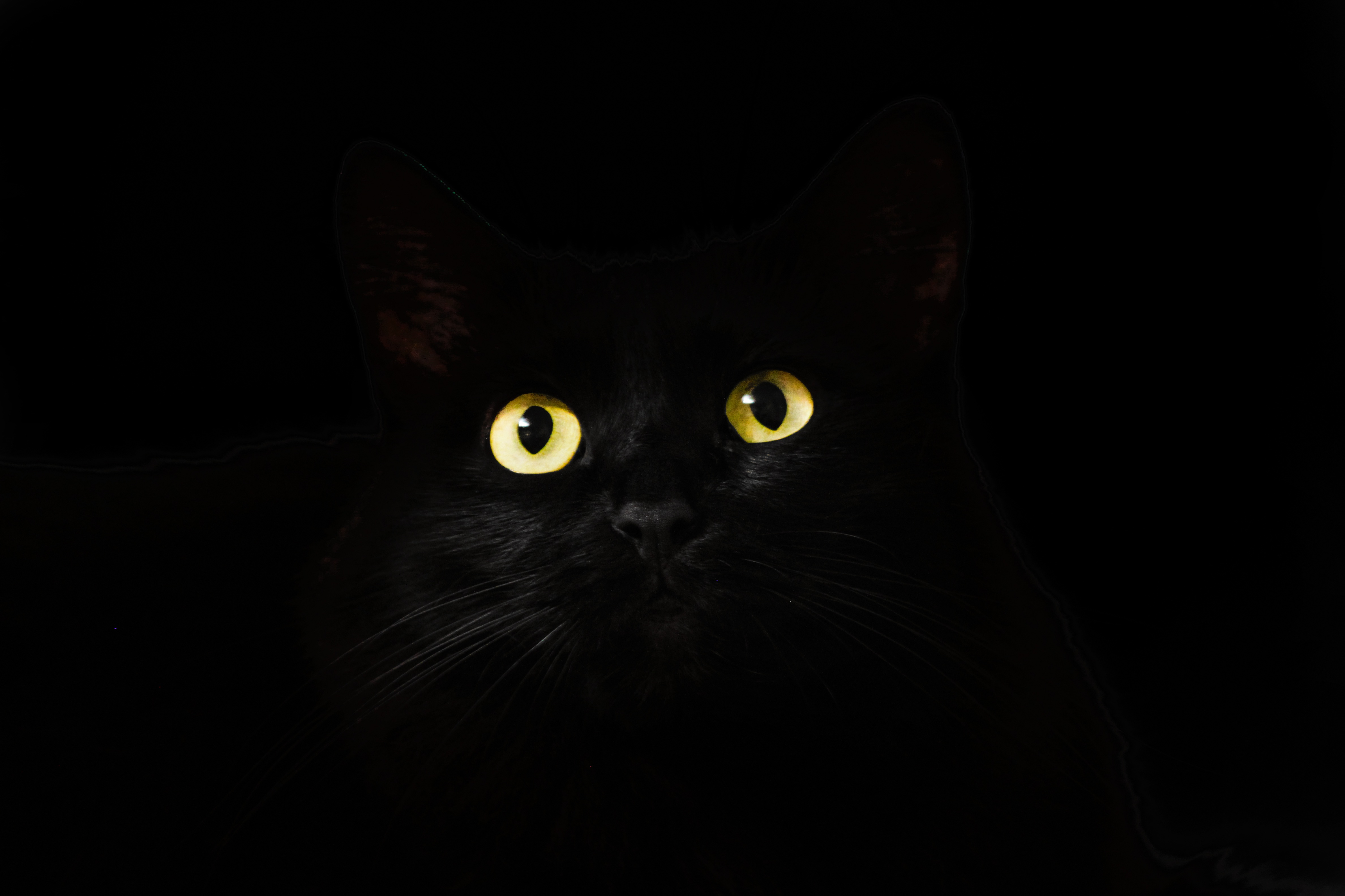Black Cat Eyes Wallpaper: Black Cat Eyes Dark 5k, HD Animals, 4k Wallpapers, Images