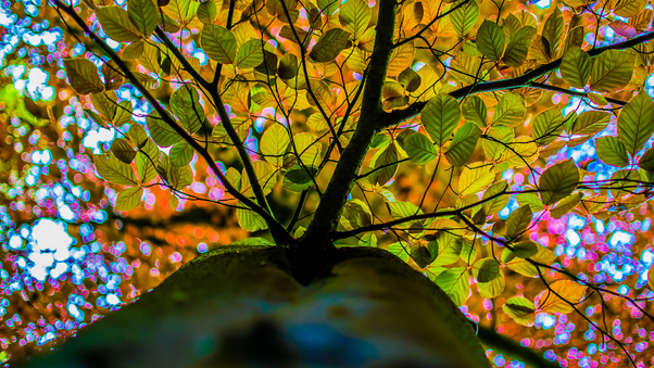 autumn-branches-ad.jpg