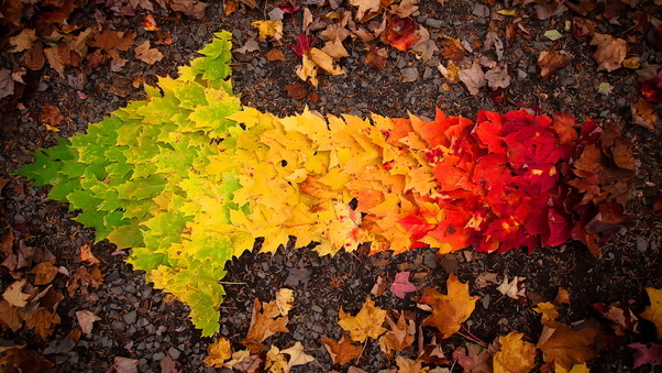 autumn-leaves-arrow.jpg