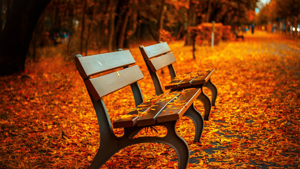 autumn-leaves-bench.jpg