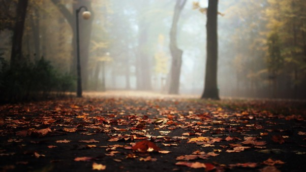 autumn-leaves-falling-on-road-pic.jpg