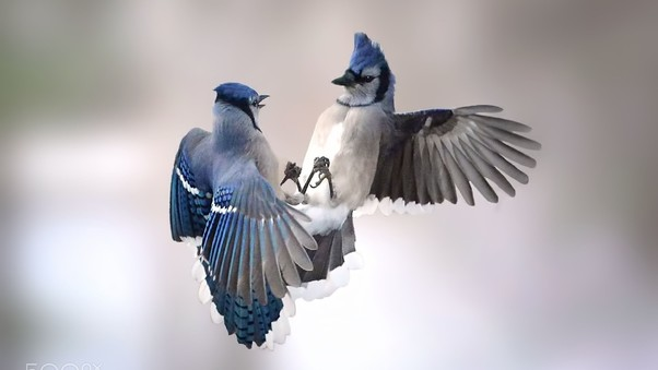 Beauiful Birds