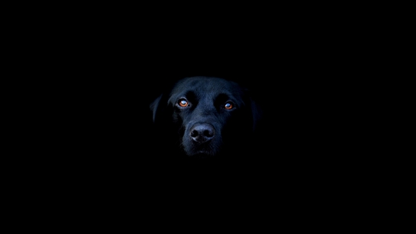 black-dog-image.jpg
