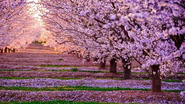 blossom-nature-pink-flowers-trees-do.jpg
