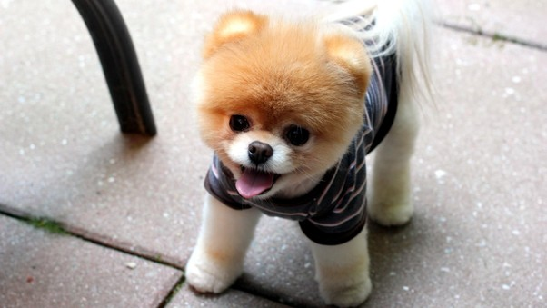 boo-puppies-qhd.jpg