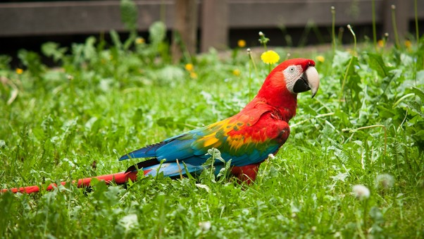 colorful-parrot.jpg