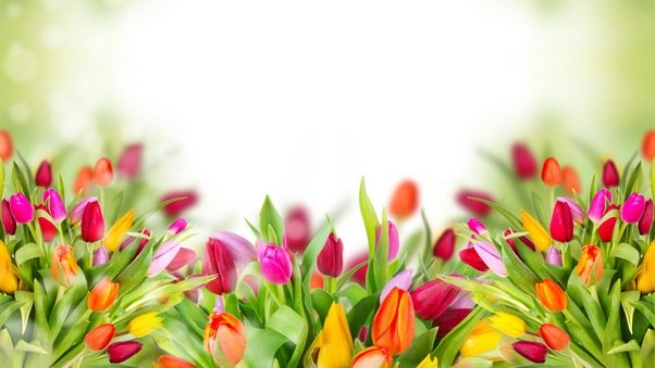 colorful-tulips-image.jpg