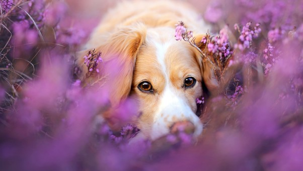 cute-dog-in-flowers-to.jpg