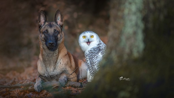 Dog With Owl