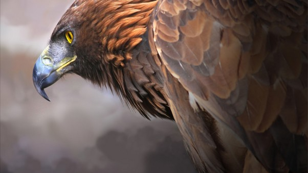 eagle-digital-art-2.jpg