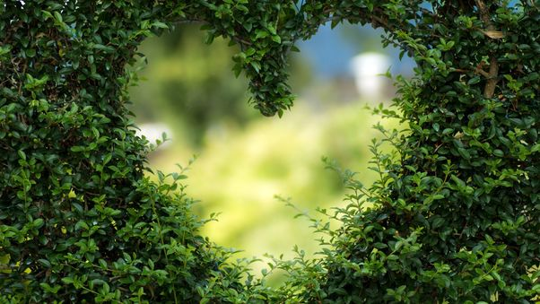heart-bushes-image.jpg