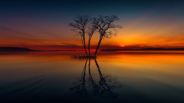 horizon-lake-nature-reflection-sunset-tree-image.jpg