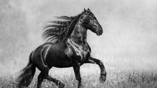 horse-black-and-white-lu.jpg