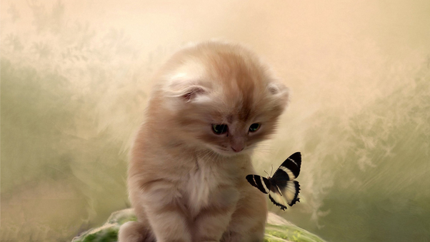 kitty-playing-with-butterfly.jpg