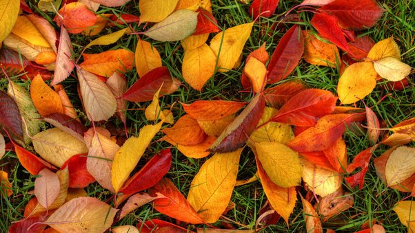 latest-autumn-leaves.jpg