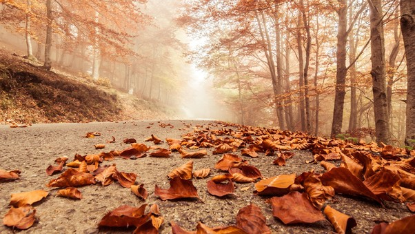 leaves-fall-on-road.jpg