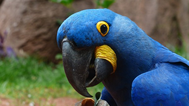 Macaw Parrot 2