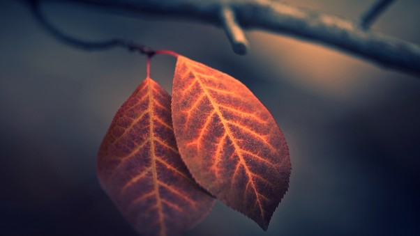 macro-leaf-photography.jpg
