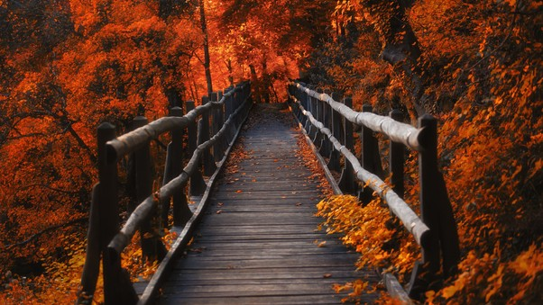 orange-leaves-bridge-4k.jpg