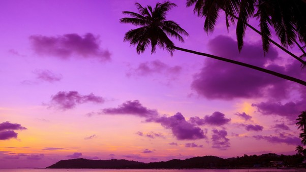 purple-palm-tree.jpg