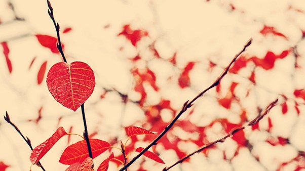 red-leaf-nature-hd.jpg