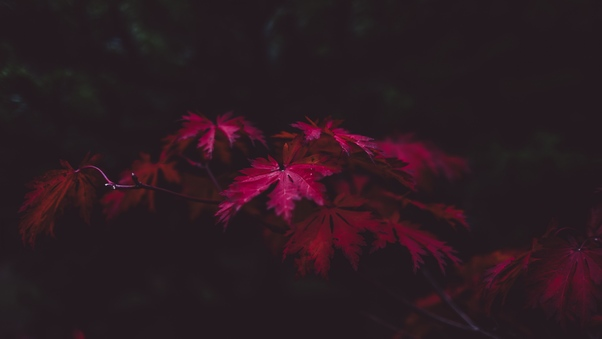 red-leaves-4k-qu.jpg