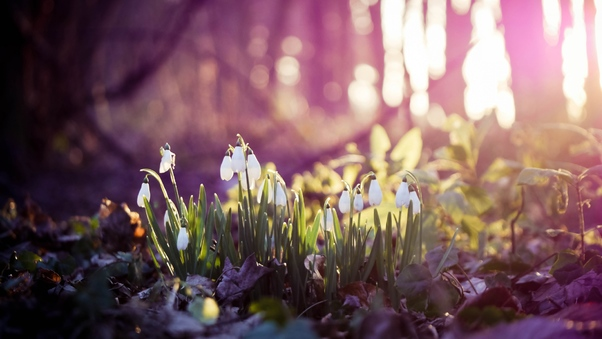 snow-drops-on-flowers-wide.jpg