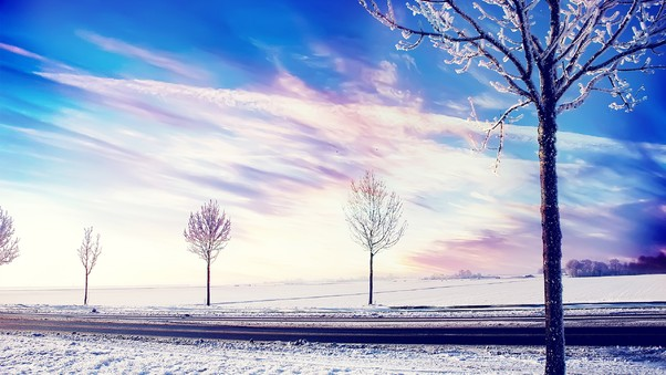 snow-winter-trees-2.jpg