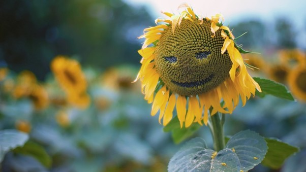 Sunflower Smiley
