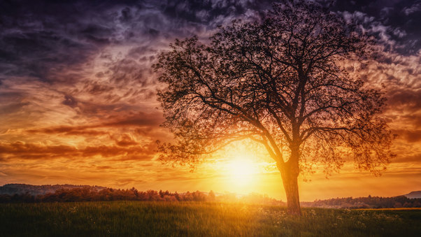 sunset-nature-trees-img.jpg