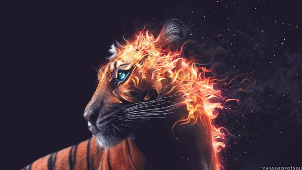 tiger-fire-graphics.jpg