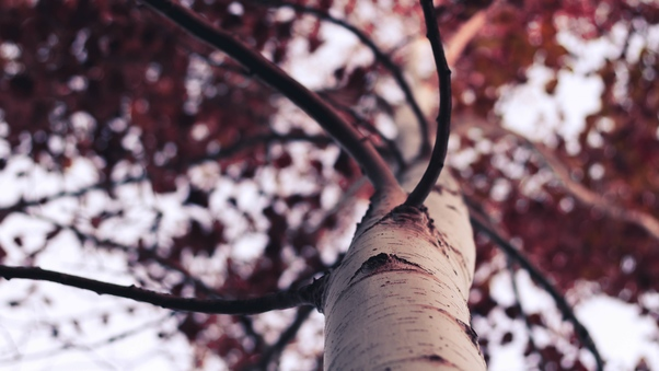 tree-branches-qhd.jpg