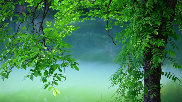 tree-leaves-summer.jpg