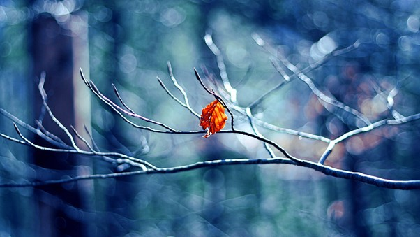 winter-tree-leaf.jpg
