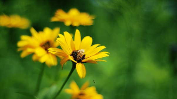 yellow-summer-flowers.jpg