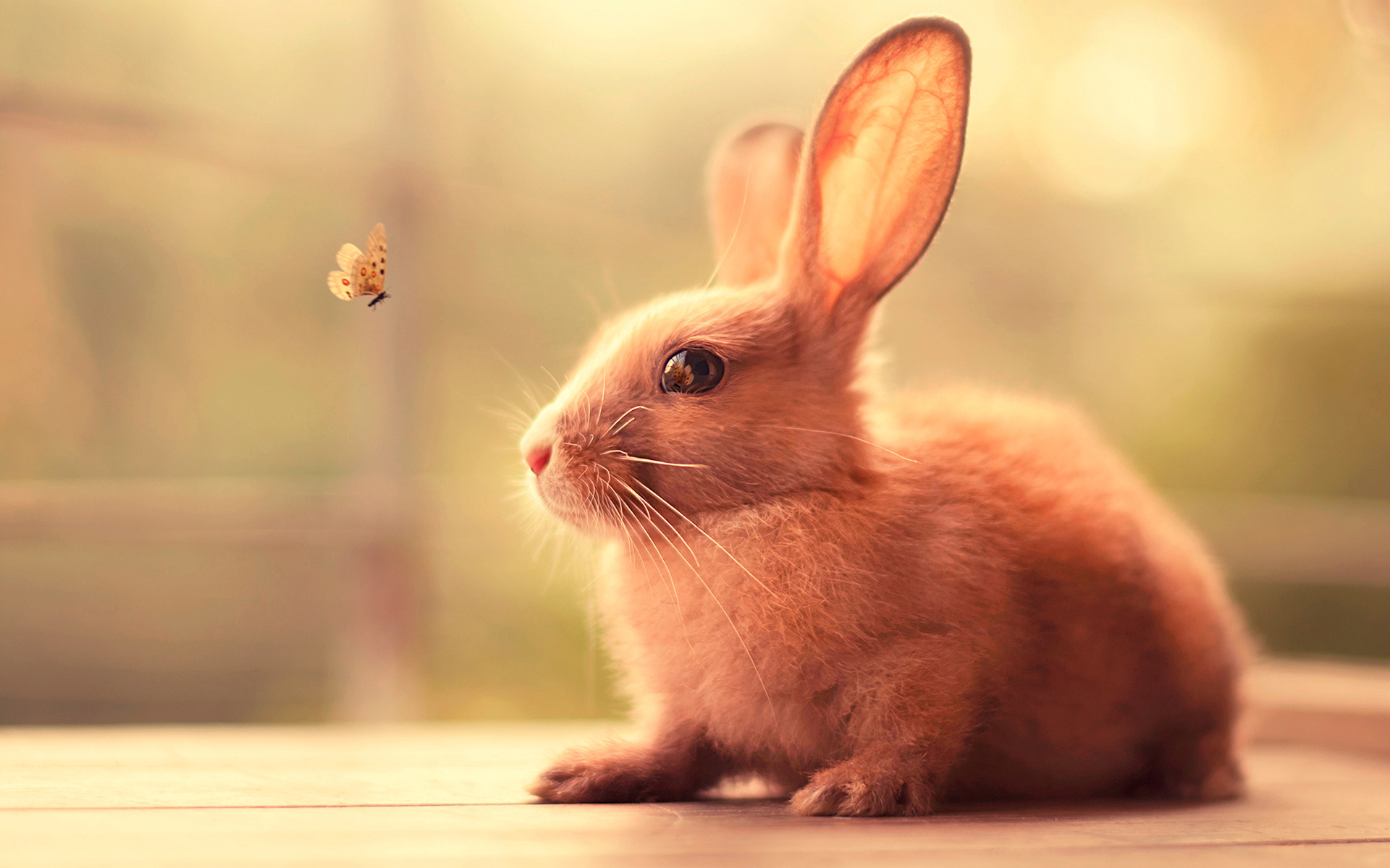 Bunny Cute, HD Animals, 4k Wallpapers, Images, Backgrounds