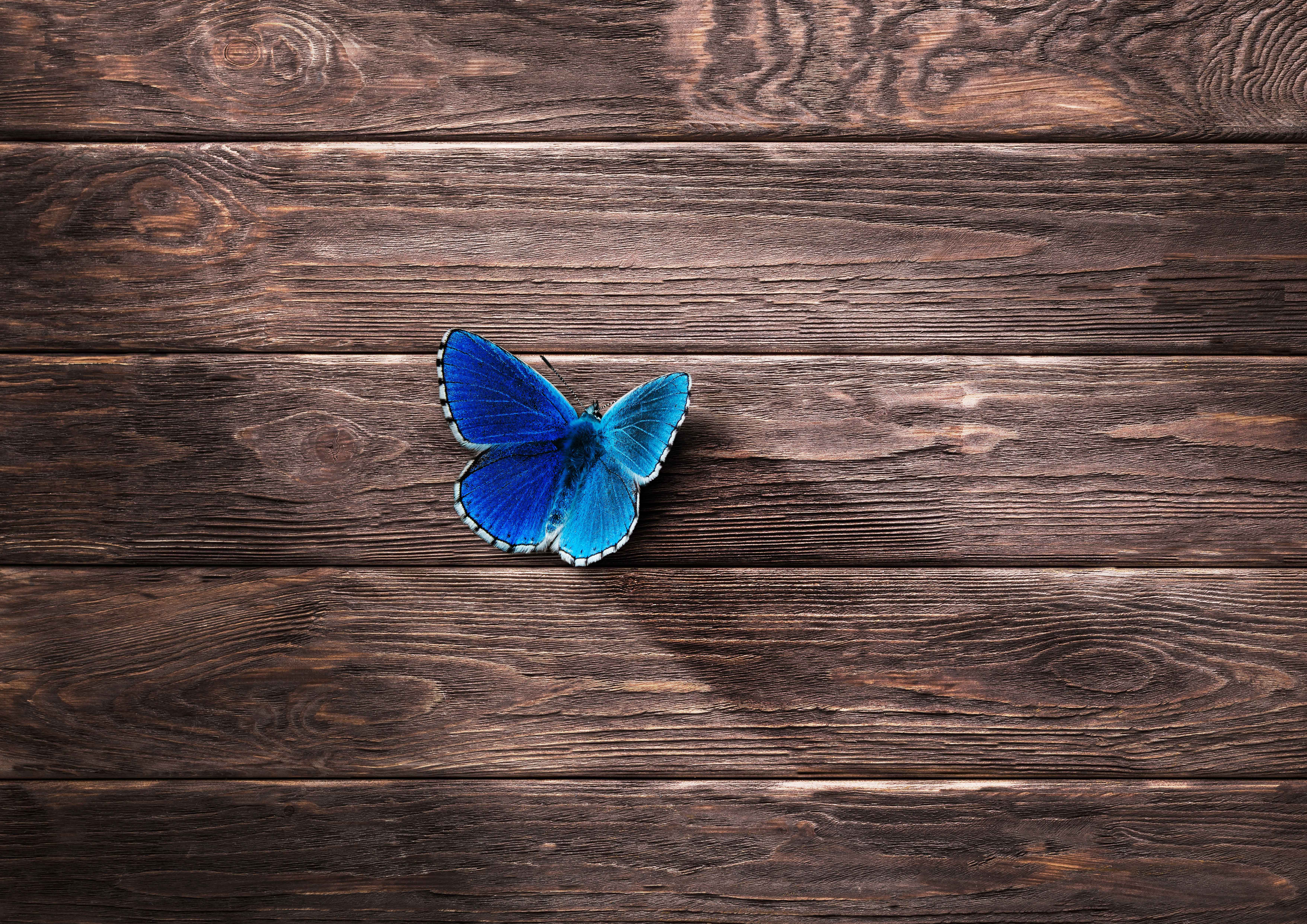 8k Animal Wallpaper Download: Butterfly 8k, HD Animals, 4k Wallpapers, Images