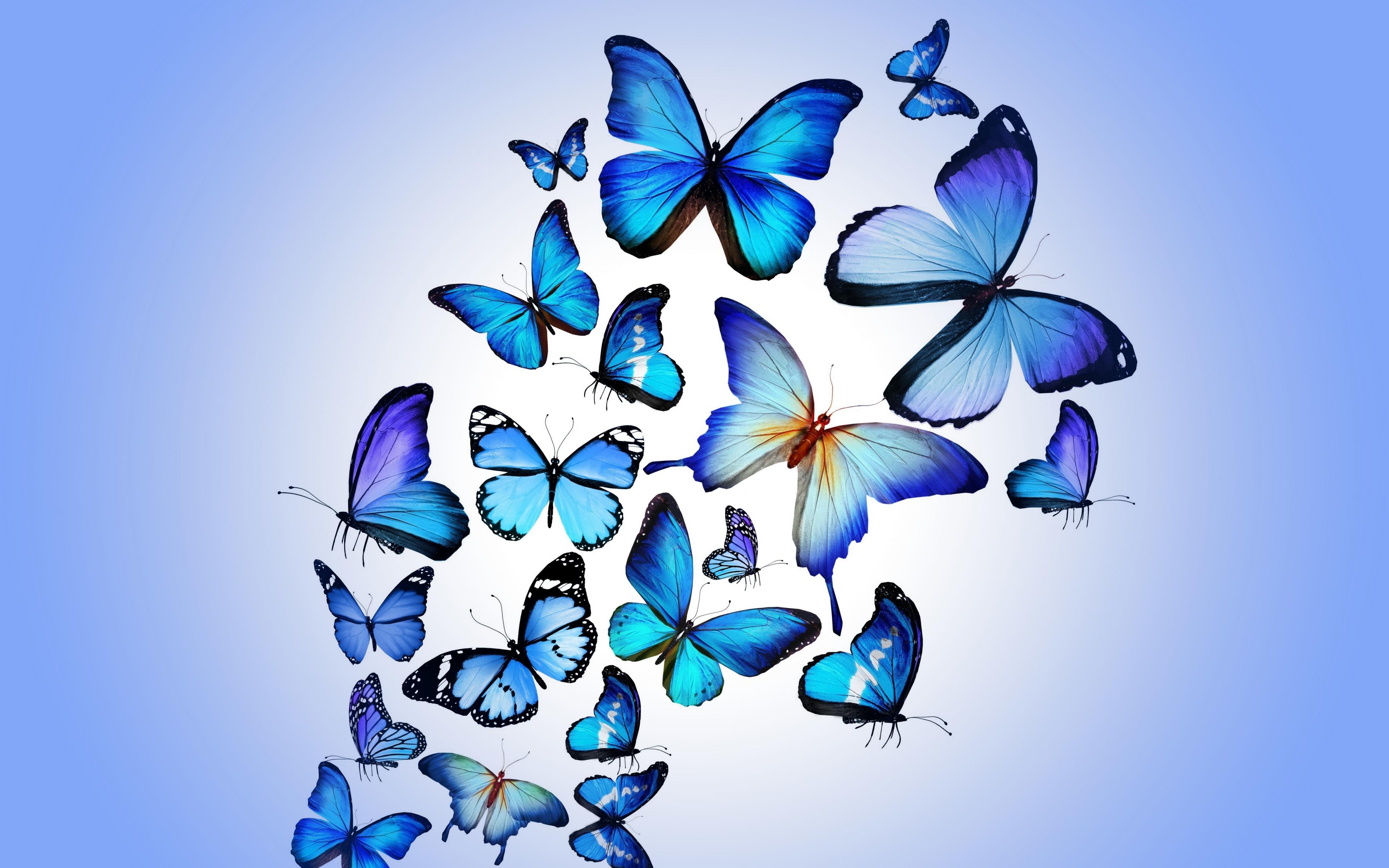 Butterfly Art | Artist HD 4k Wallpapers