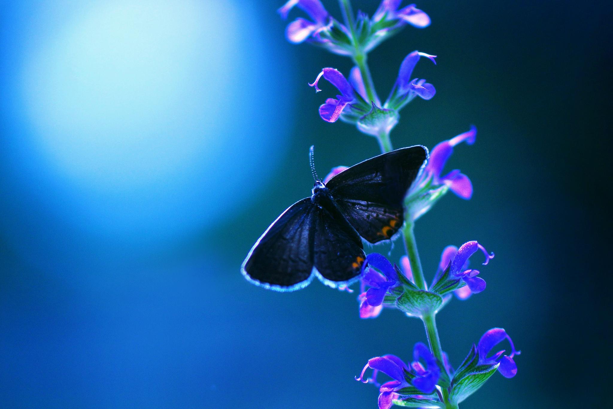 2048x1152 Butterfly Flower 2048x1152 Resolution Hd 4k Wallpapers